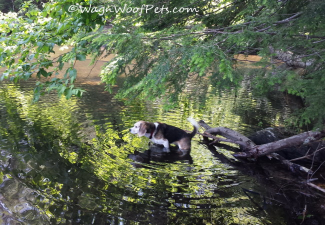 Wordless Weds - Lesson Learned
