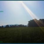 """#52Snapshots of Life """"Nature"""""""
