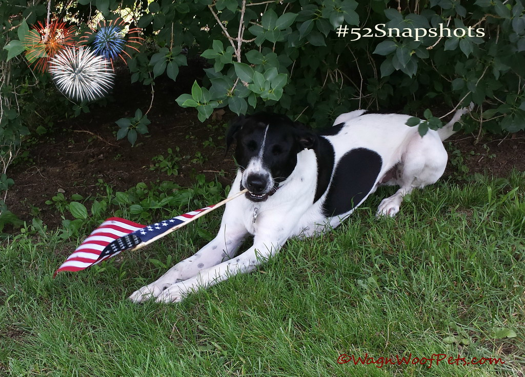 "The ""official"" #52Snapshots ""Patriotic"" photo."
