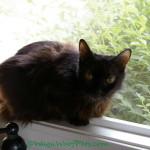 Sam's Happy Health Update & Cat Crawl Giveaway