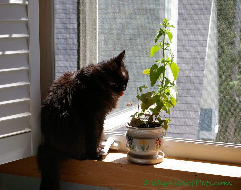 Wordless Wednesday - Catnip Queen