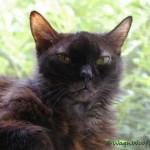 Questioning Pet Vaccinations (Part 6 – Cats)