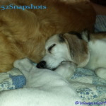 "#52Snapshots of Life – ""Snuggly"""