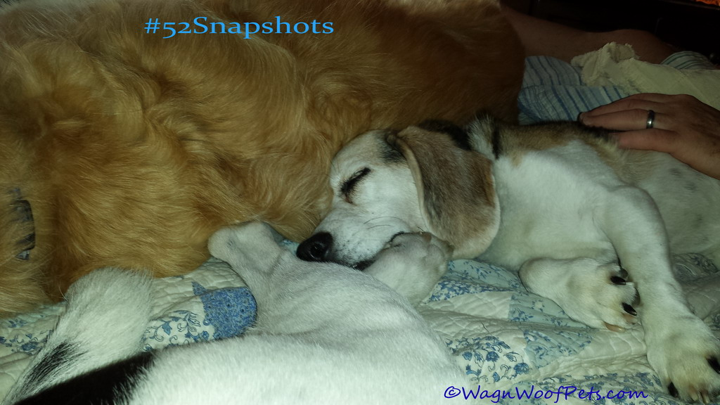 """#52Snapshots of Life - """"Snuggly"""""""