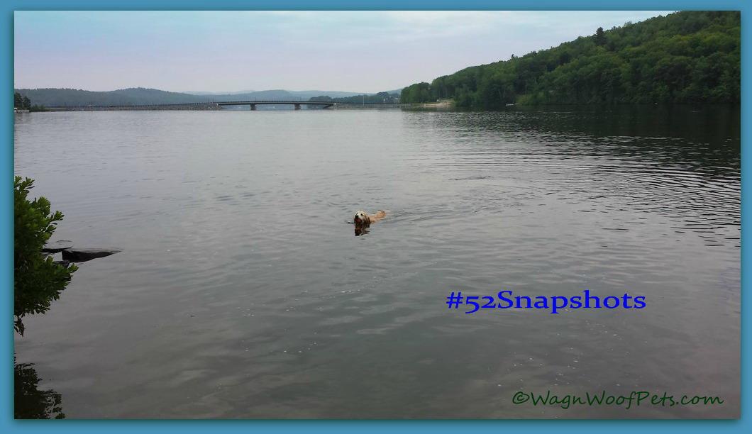 "#52Snapshots of Life - ""Summer"""
