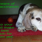 Questioning Pet Vaccinations – Wrap Up