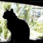 Black Cat Silhouette – #52Snapshots