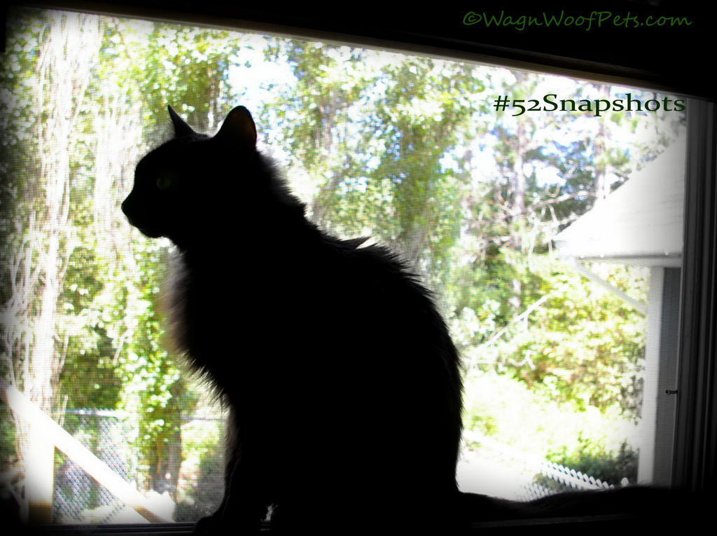 Black Cat Silhouette - #52Snapshots