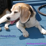 "#52Snapshots of Life – ""Sleepy"""