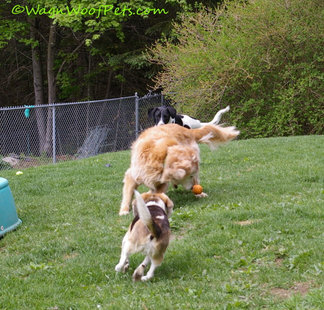 Keeping Active Dogs' Joints Healthy