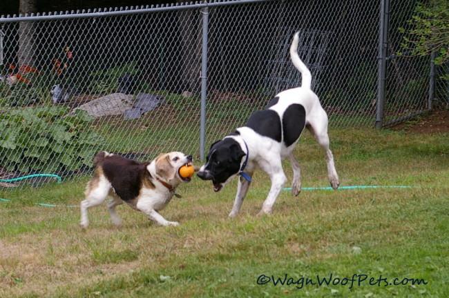 ....squabbles over balls....