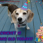 Happy 11th Birthday to our Sweet Beagle