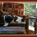"#52Snapshots of Life – ""Framed"""