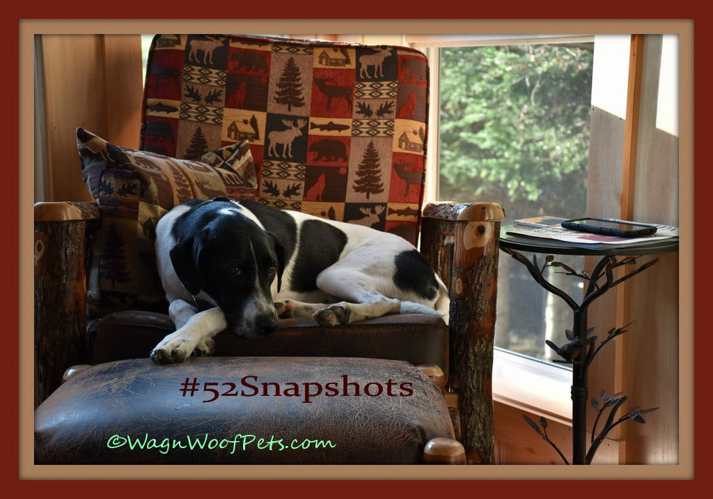 """#52Snapshots of Life - """"Framed"""""""