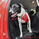 4Knines Rear Seat Cover Review & Giveaway
