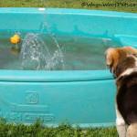 Splashdown!! II