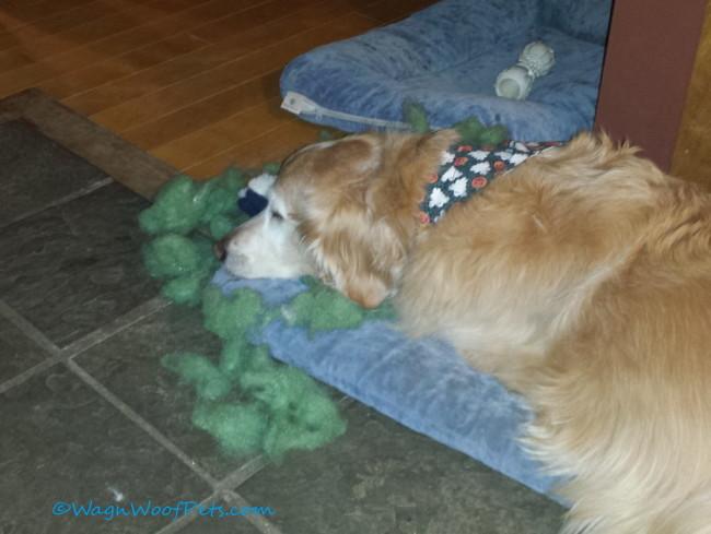 Birthday Bear Aftermath