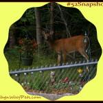 "#52Snapshots of Life – ""Animal"""