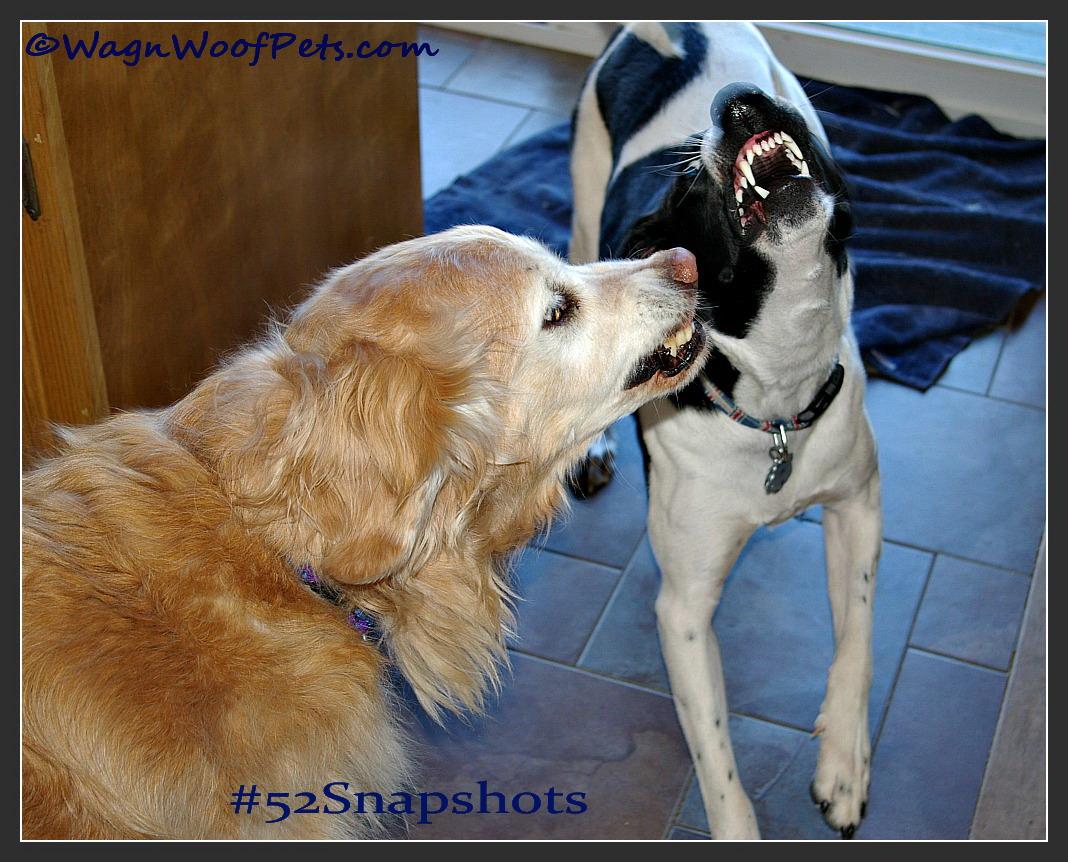 #52Snapshots of Life - Animal