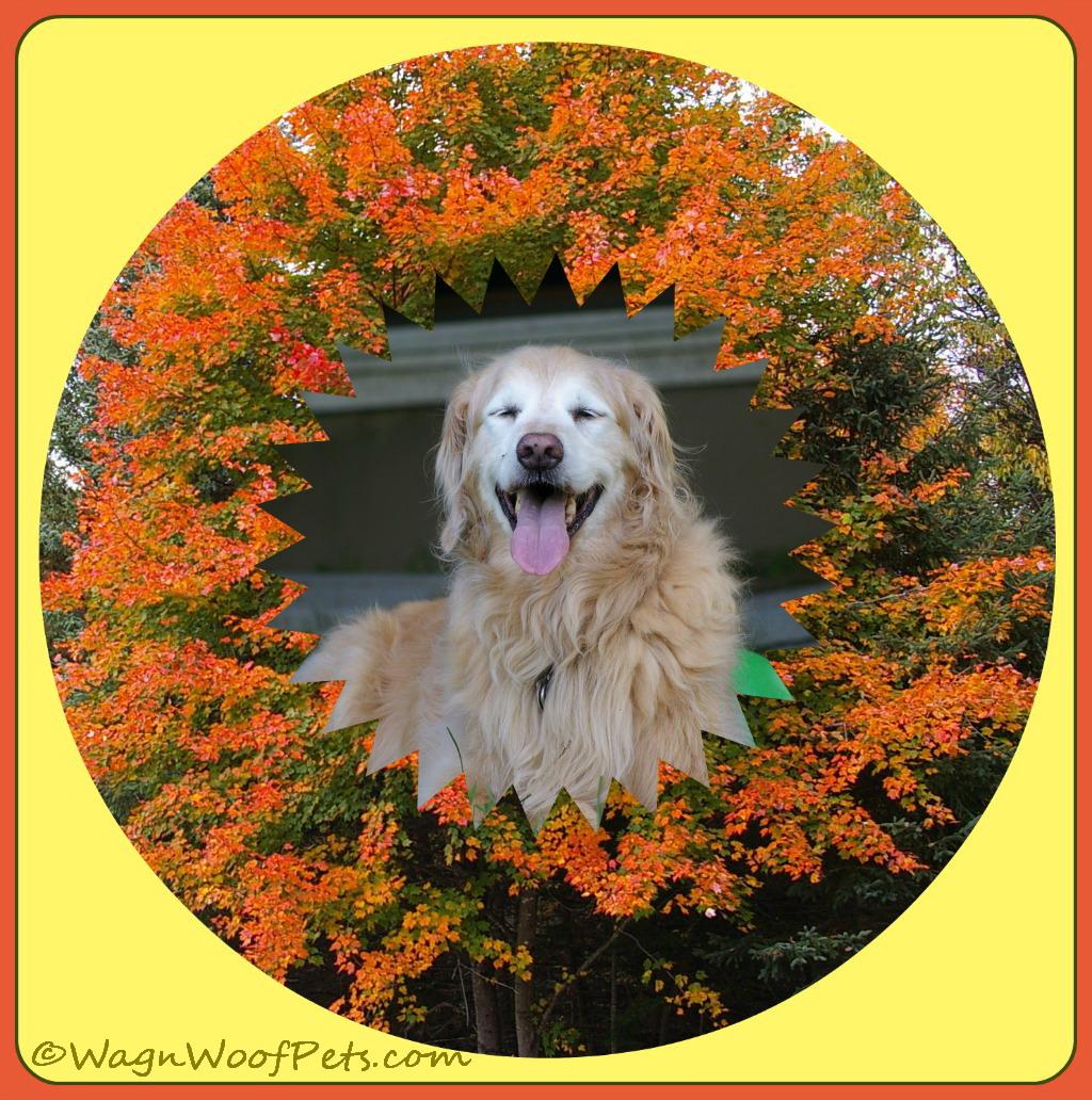 Golden Autumn Beauty