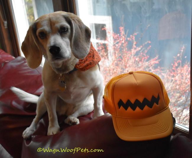 Snoopy is Every Beagle's Hero