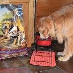 Active, Happy, & Healthy with #PinnacleHealthyPets