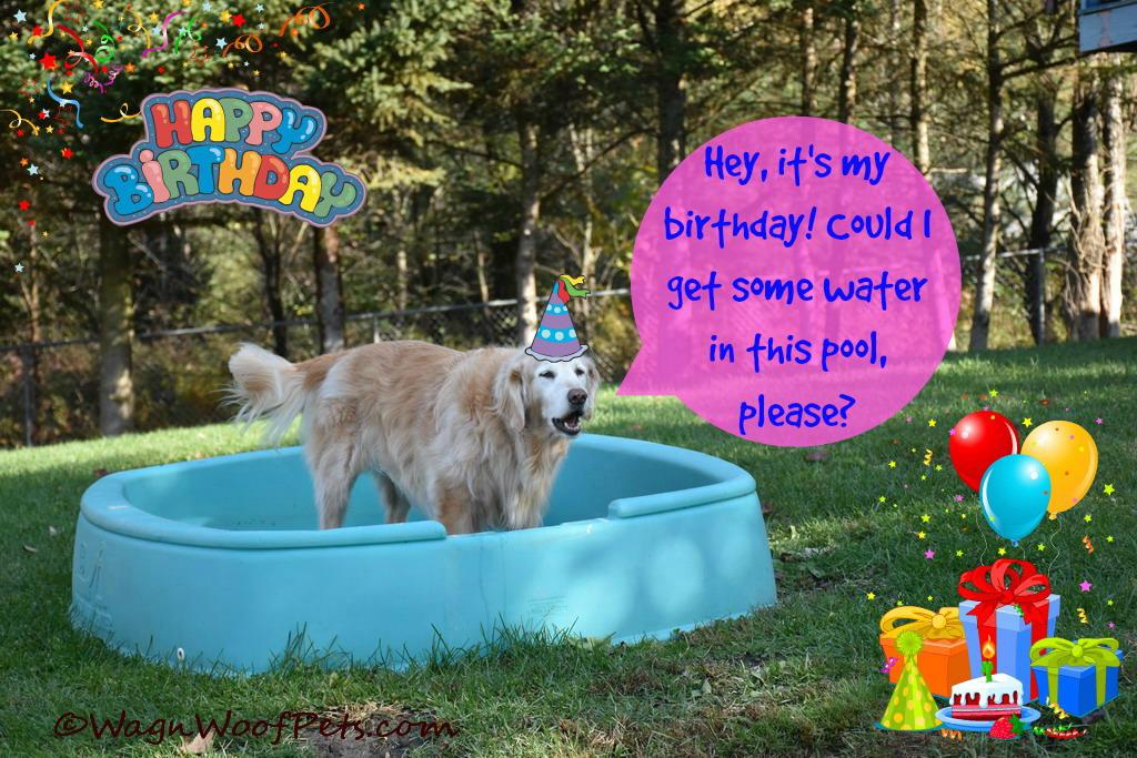 Sheba birthday