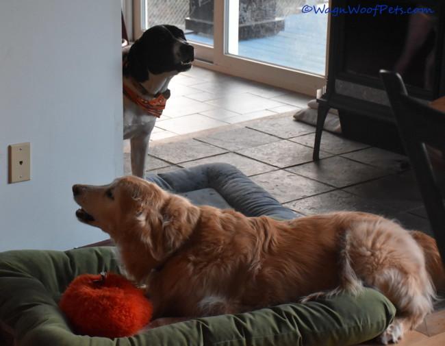 Senior Silliness - Adopt a Senior Pet!