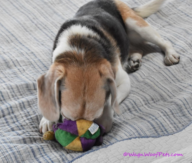 Senior Silliness - Adopt a Senior Pet Month
