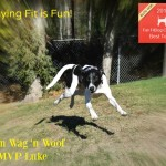 "Team Wag 'n Woof – ""Staying Fit is Fun"""