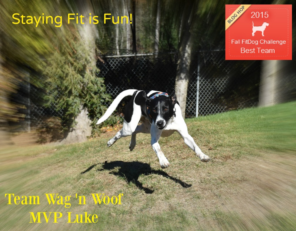 """Team Wag 'n Woof - """"Staying Fit is Fun"""""""