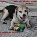 Senior Silliness in Adopt a Senior Pet Month