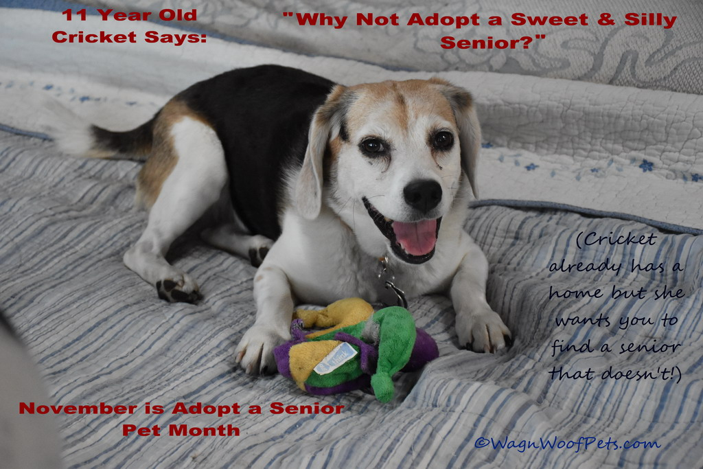 Adopt a Senior Pet Month - Senior Silliness