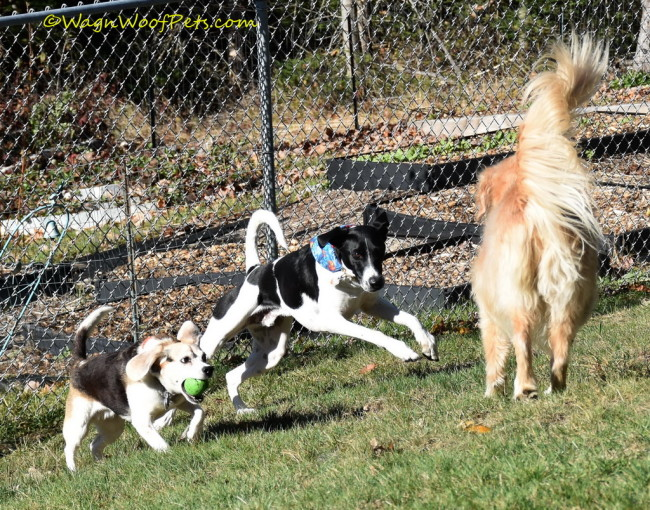 Staying Fit is Fun - Team Wag 'n Woof