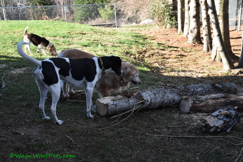 Wordless Wednesday - Clean Up Time