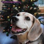 "#52Snapshots of Life – ""Bokeh"""