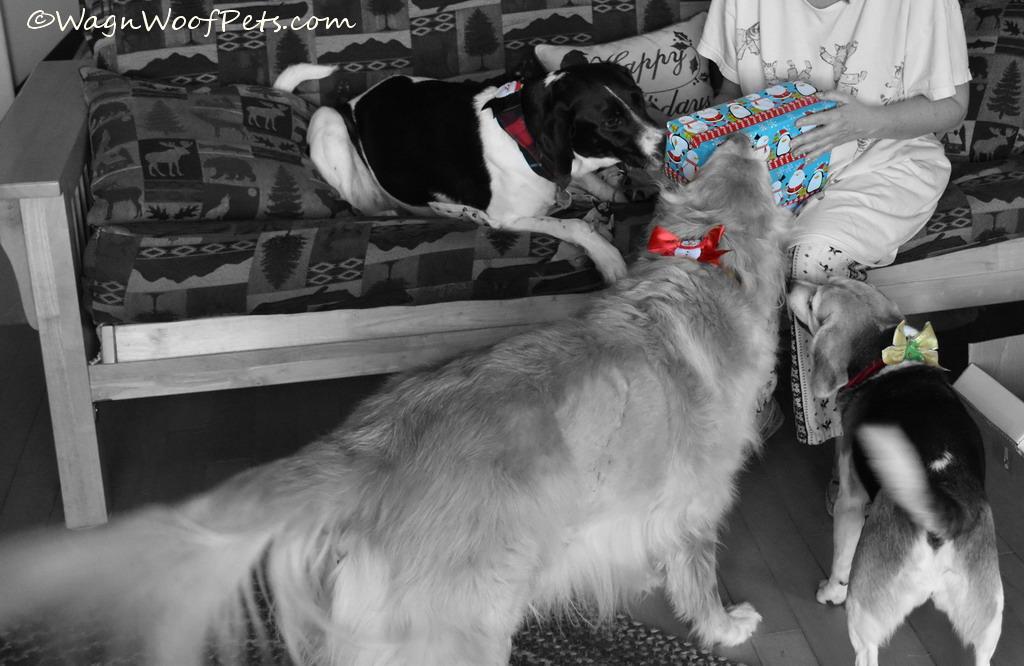 Christmas Fun - Black & White Sunday