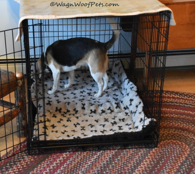 Positive Pet Training - Time to Regroup
