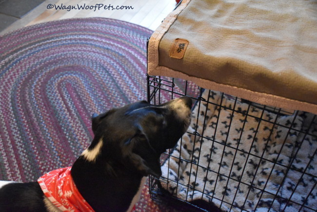 Time to Regroup with Positive Pet Training