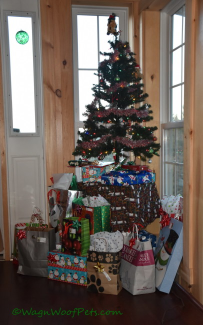 Christmas Morning at Wag 'n Woof Pets