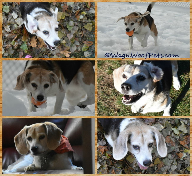 The Ears Have It - Dog Ear Fun Facts & Photos