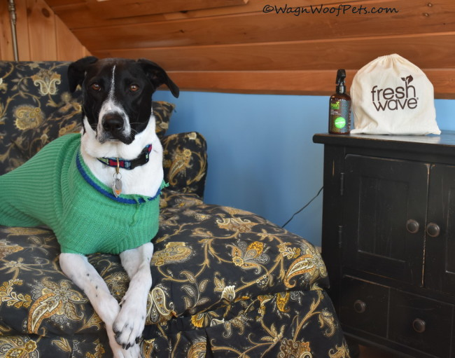 Keeping Our Home Fresh with FreshWave (&Giveaway)
