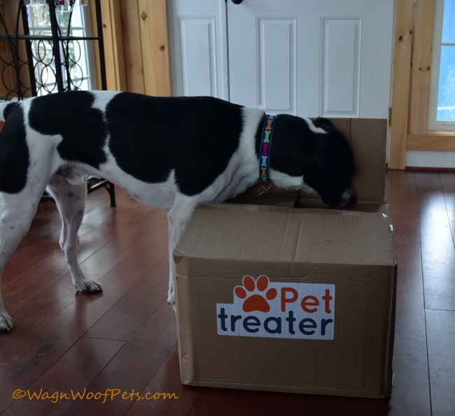 Touchdown! Pet Treater Box Review