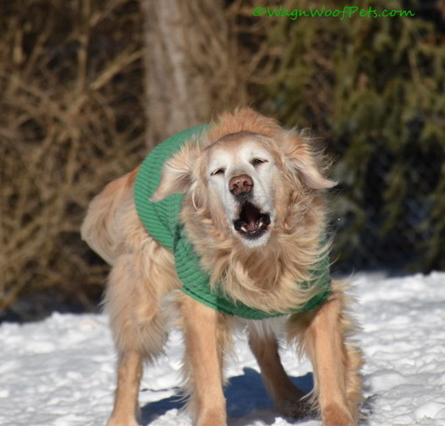 """Book Review: """"The Dog Cancer Survival Guide"""""""