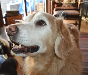 The Dog Cancer Survival Guide Book Review
