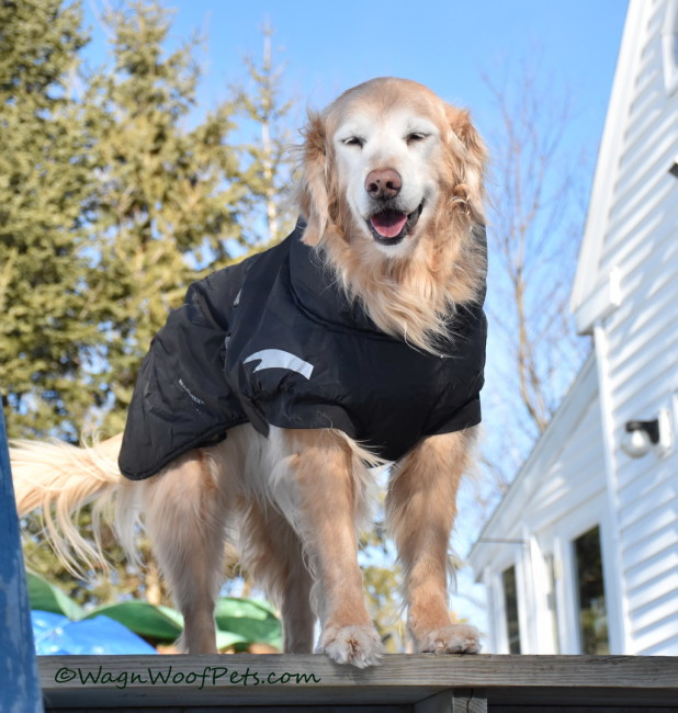 Book Review: The Dog Cancer Survival Guide