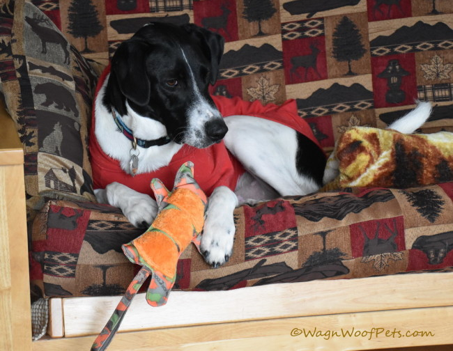 Major Dog Tiger Toy - Positive Pet Training