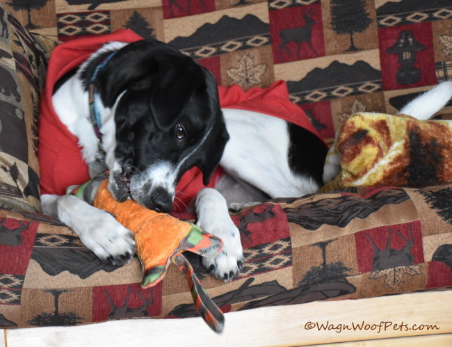 Major Dog Tiger - Positive Pet Training