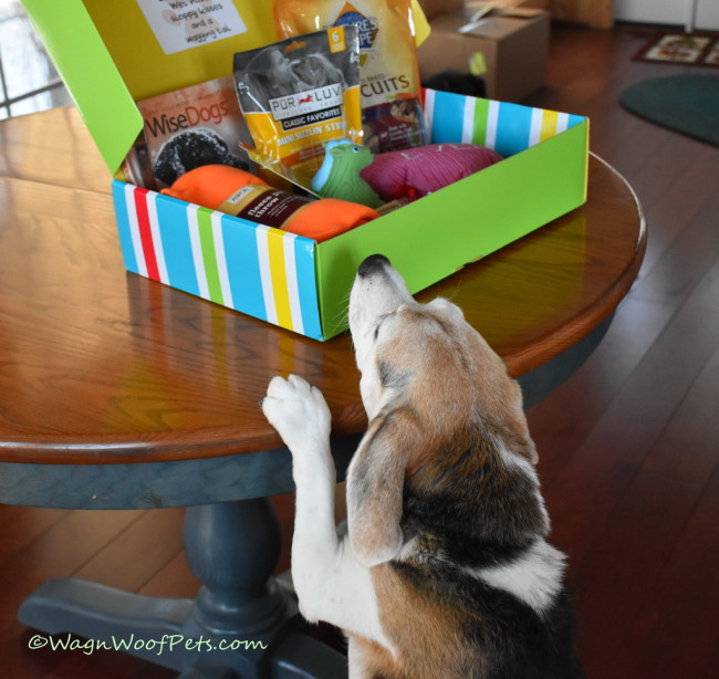 February Pet Treater Box Proves Momz Still Loves Us
