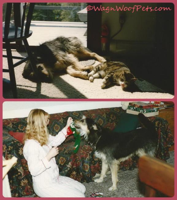 First House, First Dog, #TBT
